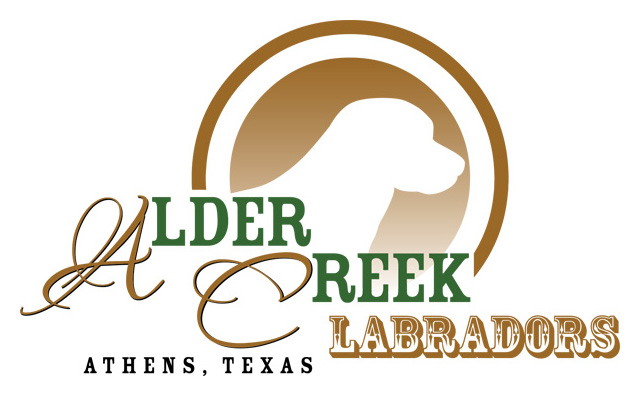 Alder Creek Labradors